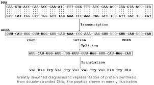 protein synthesis essay help me write my synthesis essay  do my computer homework weggif