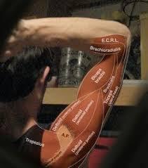 12 Best <b>Neck muscle</b> anatomy images | <b>Muscle</b> anatomy, Anatomy ...