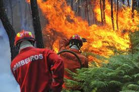 Resultado de imagem para bombeiros de portugal