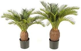 <b>artificial plant Cycas revoluta</b>, Sago Palm, height 70 cm - 22 leaves ...