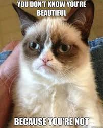 Grumpy cat on Pinterest | Grumpy Cat Meme, Angry Cat and Meme via Relatably.com