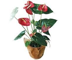 Картинки по запросу горшечные цветы фото