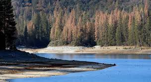 Image result for dying forests in California picture