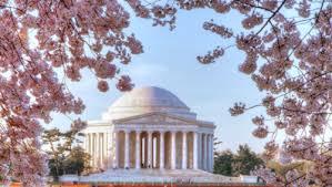 Image result for washington dc cherry blossom 2015
