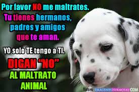 Resultado de imagen para maltratos animal
