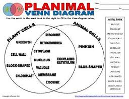 venn diagrams  animal cell and compare and contrast on pinterestplant animal cell venn diagram