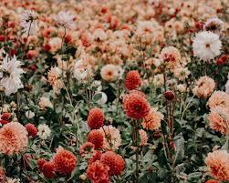 Floral Wallpapers: Free HD Download [500+ HQ]   Unsplash
