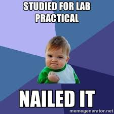 Studied for lab practical NAILED IT - Success Kid | Meme Generator via Relatably.com