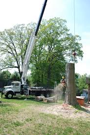 emerald ash borer prevention willow tree and landscape services emerald ash borer montgomery county