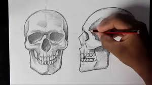 How to Draw <b>Human</b> Skull Front/<b>Profile</b> | <b>Human</b> Anatomy - YouTube