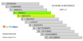 Papaver apulum [Papavero pugliese] - Flora Italiana