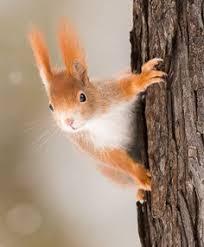 acorn | Autumn | <b>Cute squirrel</b>, Red <b>squirrel</b> und <b>Squirrel</b>