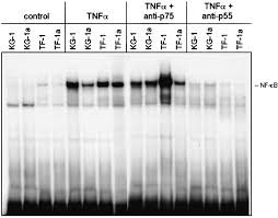 Through TNF Receptor Type I and Is Myeloid Leukemic Cell Lines ...