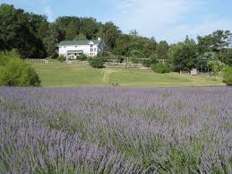 organic food client news farmhouse lavender