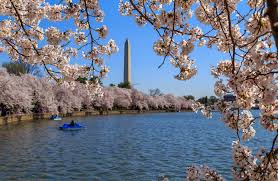 「2015,  cherry trees along potomac」の画像検索結果