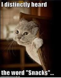 Cat memes on Pinterest   Cats, Funny Cat Memes and Cat Quotes via Relatably.com
