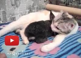 <b>Cat</b> Gives <b>Bunny</b> A Bath - Love <b>Meow</b>