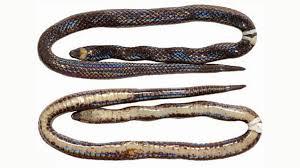 <b>Brand New</b> Species of Snake Found 'Hiding in <b>Plain</b> Sight'