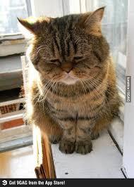 GAGBAY - Highly depressed cat via Relatably.com