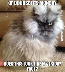 Pissed Off Cat Memes on Pinterest   Pissed Off, Cat Memes and Meme via Relatably.com