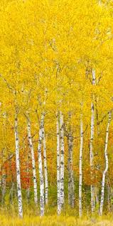 805 Best <b>Autumn</b> images | Scenery, Nature, Beautiful pictures