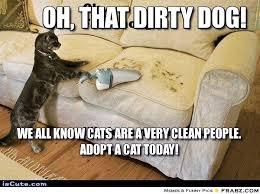 Oh, that dirty dog!... - Heehee... Self Cleaning Cat Meme ... via Relatably.com