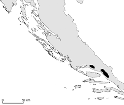 Astragalus croaticus (Fabaceae), a new species from Croatia