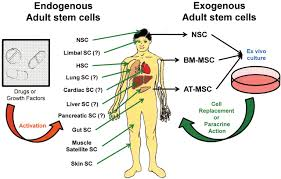 emerging use of stem cells in regenerative medicine biochemical figure
