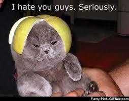 i-hate-you-guys.jpg via Relatably.com