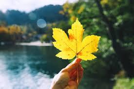 GISMETEO.COM: Weekend in Central Black Earth Region: <b>hello</b>, <b>fall</b> ...