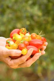 Image result for basket of produce