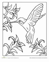 Small Picture Hummingbird Coloring Page Flapping bird Hummingbird and Bird