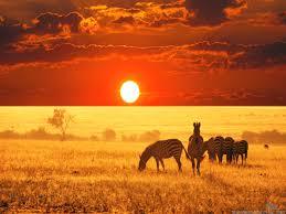 Bildresultat för safari