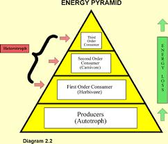 diagram of energy pyramid