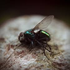 Image result for pictures of dead flies