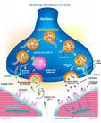 Images & Illustrations of botulinum toxin