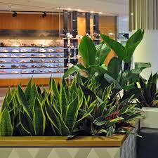 indoor plant hire brisbane office plants