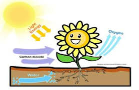 research the topic   what is photosynthesis    rsunlight photosynthesis diagram google jpg