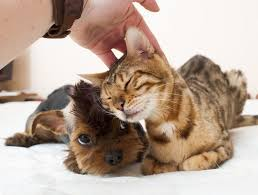 Why Do <b>Cats and Dogs</b> Love a Good Head Scratch? | Live Science