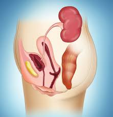 Dealing with urinary tract infections: Tips for <b>adult men</b> and <b>women</b>