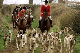 Image result for picture of a fox hunt