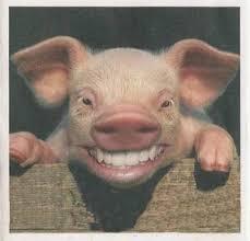 """Résultat de recherche d'images pour """"caricatures du cochon qui rit"""""""