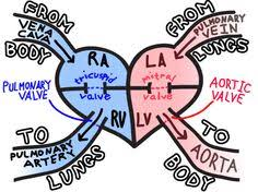 human heart diagram  heart diagram and human heart on pinterestblood flow through the heart