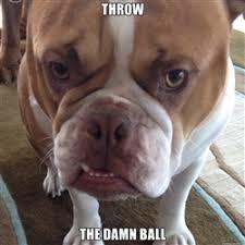 Insistent Bulldog | Meme Generator via Relatably.com