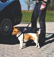 Собаки : <b>Автомобильный ремень</b> безопасности <b>Trixie</b> для собак ...
