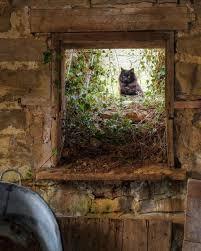 Dreams Gather Here | Животные, Фото животных, Кошачий арт