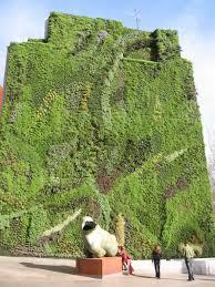 college o living wall buffalo ny: a wall of living plants designed by patrick blanc at caixa forum near