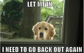 Funny dog pics via Relatably.com