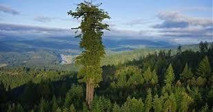 Resultado de imagen de fotos de árboles