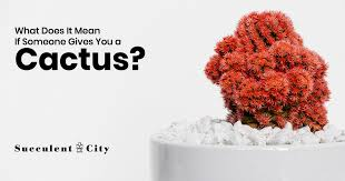 What Does it Mean if Someone Gives You a <b>Cactus</b>? | Succulent City